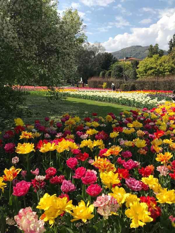 Giardini botanici Villa Taranto verbania
