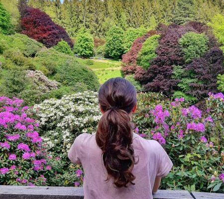 Oasi Zegna Biella rododendri in fiore