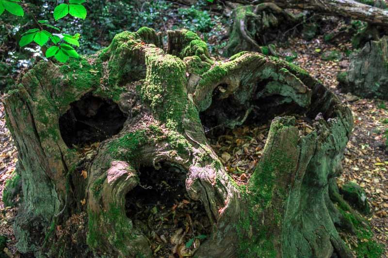 bosco del sasseto cosa vedere