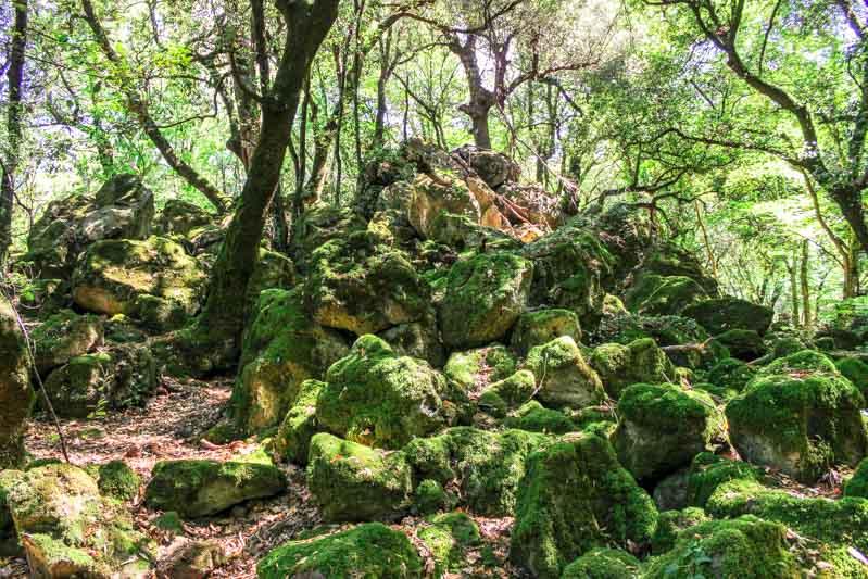 bosco del sasseto acquapendente sassi lavici