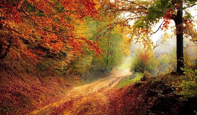 foliage in italia bosco foglie rosse