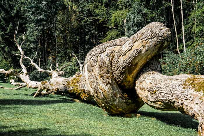 tronco intrecciato ad arte sella