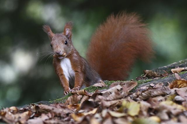 foliage in lombardia scoiattolo parco di monza autunno